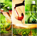 Wine.Beautiful Grapes Collage Royalty Free Stock Photography