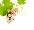 Wine bottle corks leaves grape isolated white background close up Stock Photo