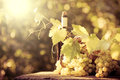 Wine bottle and grapes of vine Royalty Free Stock Photo