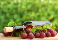 Wine bottle, red grape Royalty Free Stock Photo