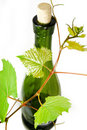 Wine bottle with young grape vine branch Stock Photography