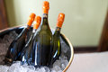 Wine bottles in silver cold ice bucket Stock Image