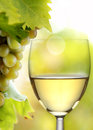 Wine collection white wine glass and grapes in vineyard blurred background Royalty Free Stock Photos