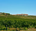 Wine Country, Southern California Royalty Free Stock Photo