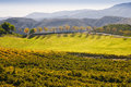 Wine country temecula southern california vineyard with rows of grape vines and mountains trees and a green field in the of the Stock Image