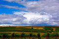 Wine country vineyard landscape Royalty Free Stock Photo