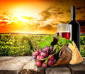 Wine and evening green vineyard in mountains at the sunset Stock Photos