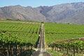 Wine farm Stock Images