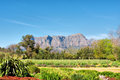 Wine farm and garden against mountains sunset light shot in winelands near stellenbosch western cape south africa Stock Photo