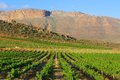 Wine farm in mountains Royalty Free Stock Photography