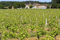Wine farm and vineyard in rural landscape france province department gironde region aquitanie district langon area entre deux mers Royalty Free Stock Image