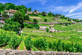 Wine Fields on mountain / hillside Royalty Free Stock Photo