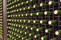 Wine glass  bottles in winery Royalty Free Stock Photo