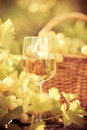 Wine glass and grapes of vine Royalty Free Stock Photo