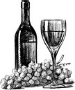 Wine and grapes vector drawing of a bottle glass grape Royalty Free Stock Image