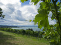 Wine and lake Stock Photography