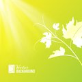 Wine leaf over shine backdrop vector illustration Stock Photo