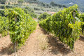 Wine ranks in tuscany the mountains of italy with a small village at a mountain on the background Stock Images