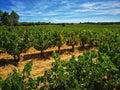 Wine, Ribera del duero