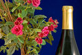 Wine and roses Stock Photography