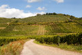Wine route in alsace view on the famous france offers this view on a curving road through the vineyards near riquewihr Royalty Free Stock Image
