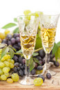 Wine sampling Stock Photography