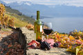 Wine terrace vineyard lavaux region switzerland Stock Images