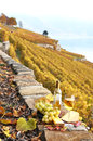 Wine terrace vineyard lavaux region switzerland Royalty Free Stock Photo