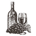 Wine vector logo design template grape or alcohol sketch on a white background illustration Stock Images
