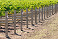 Wine Vineyard Stock Photo