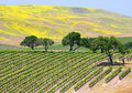 Wine Vineyard Stock Photography