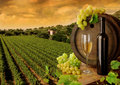 Wine and vineyard in sunset Stock Image