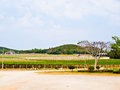 Wine yard in nakorn ratchasima thailand Stock Photos