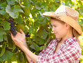 Winemaker in the vineyard examining grape harvest young viticulture person in the garden Royalty Free Stock Image