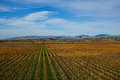 Winery in autumn blenheim marlborough new zealand Stock Photos