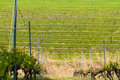 Winery field slope somewhere in canada quebec Royalty Free Stock Photography