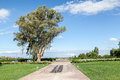 Winery garden mendoza argentina trees in a of a in Royalty Free Stock Photos