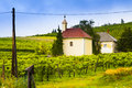 Winery wine landscape in hungary around badacsonyi Stock Photography