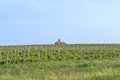 Wineyard a country side from fruit to wine Royalty Free Stock Photos