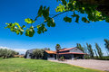 Wineyard in mendoza argentina south america Stock Photography