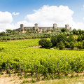 Wineyard in tuscany monteriggioni region italy front of the ancient medieval walls Stock Photography