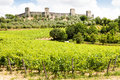 Wineyard in tuscany monteriggioni region italy front of the ancient medieval walls Stock Images