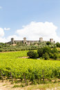 Wineyard in tuscany monteriggioni region italy front of the ancient medieval walls Royalty Free Stock Photos