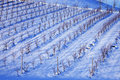 Wineyard under the snow Royalty Free Stock Photos
