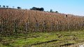 Wineyard in the winter located siena italy Royalty Free Stock Image