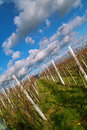 Wineyards in de herfst Stock Afbeelding