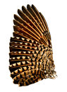 Wing of flicker bird full related to the woodpecker family Stock Photography