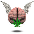 Winged brain marijuana leaf Stock Photography