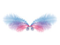 Wings with blue and pink feathers beautiful soft eps Stock Image