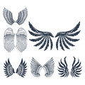 Wings isolated animal feather pinion bird freedom flight natural peace design vector illustration.